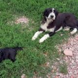 kutya-menhely-gazdit-keres-hajdú-bihar-hajdúszoboszló-kutya-orokbefogadas-2019-augusztus-9