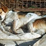 kutya-menhely-gazdit-keres-hajdú-bihar-hajdúszoboszló-kutya-orokbefogadas-2019-december-11