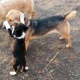 kutya-menhely-gazdit-keres-hajdú-bihar-hajdúszoboszló-kutya-orokbefogadas-2019-december-12