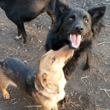 kutya-menhely-gazdit-keres-hajdú-bihar-hajdúszoboszló-kutya-orokbefogadas-2019-december-13