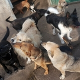 kutya-menhely-gazdit-keres-hajdú-bihar-hajdúszoboszló-kutya-orokbefogadas-2019-december-16