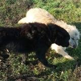 kutya-menhely-gazdit-keres-hajdú-bihar-hajdúszoboszló-kutya-orokbefogadas-2019-december-21