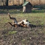 kutya-menhely-gazdit-keres-hajdú-bihar-hajdúszoboszló-kutya-orokbefogadas-2019-december-24