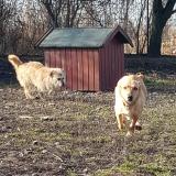 kutya-menhely-gazdit-keres-hajdú-bihar-hajdúszoboszló-kutya-orokbefogadas-2019-december-27