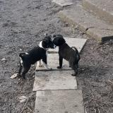 kutya-menhely-gazdit-keres-hajdú-bihar-hajdúszoboszló-kutya-orokbefogadas-2019-december-28