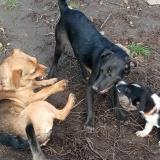kutya-menhely-gazdit-keres-hajdú-bihar-hajdúszoboszló-kutya-orokbefogadas-2019-december-30