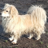 kutya-menhely-gazdit-keres-hajdú-bihar-hajdúszoboszló-kutya-orokbefogadas-2019-december-32