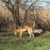 kutya-menhely-gazdit-keres-hajdú-bihar-hajdúszoboszló-kutya-orokbefogadas-2019-december-7
