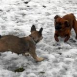 kutya-menhely-hajdú-bihar-hajdúszoboszló-kutyaorokbefogadas-2019.februar-11