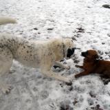 kutya-menhely-hajdú-bihar-hajdúszoboszló-kutyaorokbefogadas-2019.februar-13