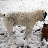 kutya-menhely-hajdú-bihar-hajdúszoboszló-kutyaorokbefogadas-2019.februar-14
