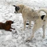kutya-menhely-hajdú-bihar-hajdúszoboszló-kutyaorokbefogadas-2019.februar-15