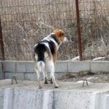 kutya-menhely-hajdú-bihar-hajdúszoboszló-kutyaorokbefogadas-2019.februar-16