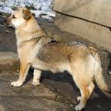 kutya-menhely-hajdú-bihar-hajdúszoboszló-kutyaorokbefogadas-2019.februar-2