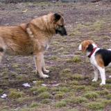 kutya-menhely-hajdú-bihar-hajdúszoboszló-kutyaorokbefogadas-2019.februar-24