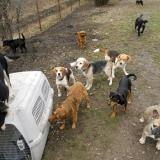 kutya-menhely-hajdú-bihar-hajdúszoboszló-kutyaorokbefogadas-2019.februar-28