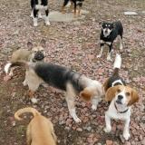 kutya-menhely-hajdú-bihar-hajdúszoboszló-kutyaorokbefogadas-2019.februar-30