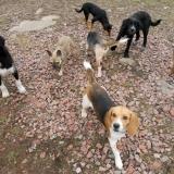 kutya-menhely-hajdú-bihar-hajdúszoboszló-kutyaorokbefogadas-2019.februar-31