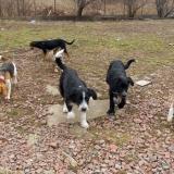 kutya-menhely-hajdú-bihar-hajdúszoboszló-kutyaorokbefogadas-2019.februar-32