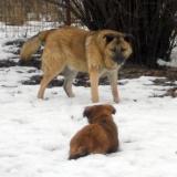 kutya-menhely-hajdú-bihar-hajdúszoboszló-kutyaorokbefogadas-2019.februar-7
