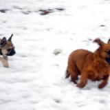 kutya-menhely-hajdú-bihar-hajdúszoboszló-kutyaorokbefogadas-2019.februar-8