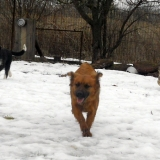 kutya-menhely-hajdú-bihar-hajdúszoboszló-kutyaorokbefogadas-2019.februar-9