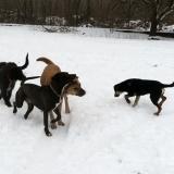 kutya-menhely-hajdú-bihar-hajdúszoboszló-kutyaorokbefogadas-2019.januar-18