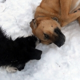kutya-menhely-hajdú-bihar-hajdúszoboszló-kutyaorokbefogadas-2019.januar-21