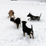 kutya-menhely-hajdú-bihar-hajdúszoboszló-kutyaorokbefogadas-2019.januar-23