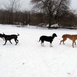 kutya-menhely-hajdú-bihar-hajdúszoboszló-kutyaorokbefogadas-2019.januar-25
