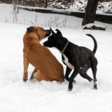 kutya-menhely-hajdú-bihar-hajdúszoboszló-kutyaorokbefogadas-2019.januar-27