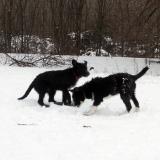 kutya-menhely-hajdú-bihar-hajdúszoboszló-kutyaorokbefogadas-2019.januar-3