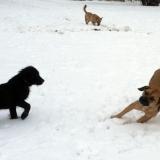 kutya-menhely-hajdú-bihar-hajdúszoboszló-kutyaorokbefogadas-2019.januar-5