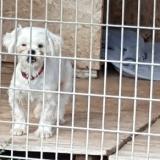 kutya-menhely-gazdit-keres-hajdú-bihar-hajdúszoboszló-kutya-orokbefogadas-2019-julius-10