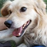 kutya-menhely-gazdit-keres-hajdú-bihar-hajdúszoboszló-kutya-orokbefogadas-2019-julius-11