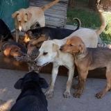 kutya-menhely-gazdit-keres-hajdú-bihar-hajdúszoboszló-kutya-orokbefogadas-2019-julius-12