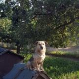 kutya-menhely-gazdit-keres-hajdú-bihar-hajdúszoboszló-kutya-orokbefogadas-2019-julius-15