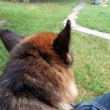 kutya-menhely-gazdit-keres-hajdú-bihar-hajdúszoboszló-kutya-orokbefogadas-2019-julius-19