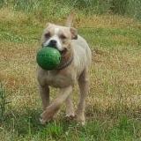 kutya-menhely-gazdit-keres-hajdú-bihar-hajdúszoboszló-kutya-orokbefogadas-2019-julius-21
