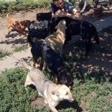 kutya-menhely-gazdit-keres-hajdú-bihar-hajdúszoboszló-kutya-orokbefogadas-2019-julius-22