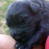 kutya-menhely-gazdit-keres-hajdú-bihar-hajdúszoboszló-kutya-orokbefogadas-2019-julius-25