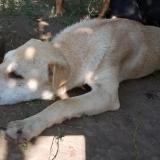 kutya-menhely-gazdit-keres-hajdú-bihar-hajdúszoboszló-kutya-orokbefogadas-2019-julius-26