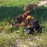 kutya-menhely-gazdit-keres-hajdú-bihar-hajdúszoboszló-kutya-orokbefogadas-2019-julius-27