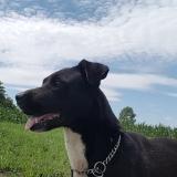 kutya-menhely-gazdit-keres-hajdú-bihar-hajdúszoboszló-kutya-orokbefogadas-2019-julius-6