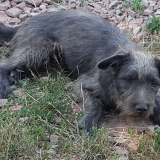 kutya-menhely-gazdit-keres-hajdú-bihar-hajdúszoboszló-kutya-orokbefogadas-2019-julius-9