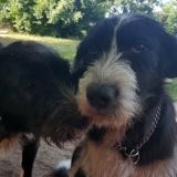 kutya-menhely-gazdit-keres-hajdú-bihar-hajdúszoboszló-kutya-orokbefogadas-12