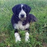 kutya-menhely-gazdit-keres-hajdú-bihar-hajdúszoboszló-kutya-orokbefogadas-13