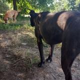 kutya-menhely-gazdit-keres-hajdú-bihar-hajdúszoboszló-kutya-orokbefogadas-17