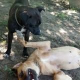 kutya-menhely-gazdit-keres-hajdú-bihar-hajdúszoboszló-kutya-orokbefogadas-18