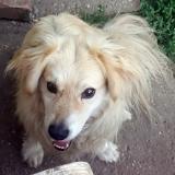 kutya-menhely-gazdit-keres-hajdú-bihar-hajdúszoboszló-kutya-orokbefogadas-21